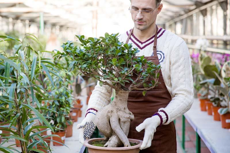 Cura dei bonsai