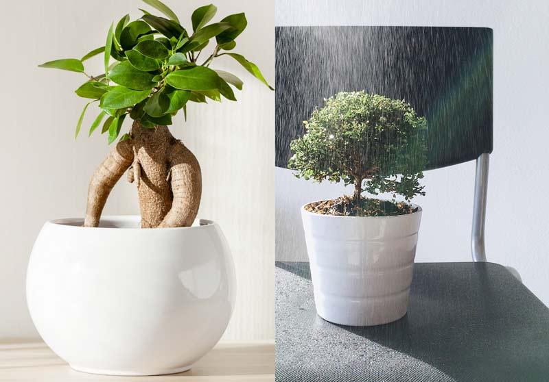 Vaso in ceramica per bonsai